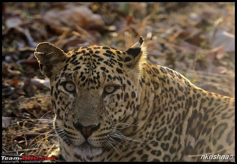 Jungle Retreat Wayanad and Nagarhole yet again!-img_6039.jpg