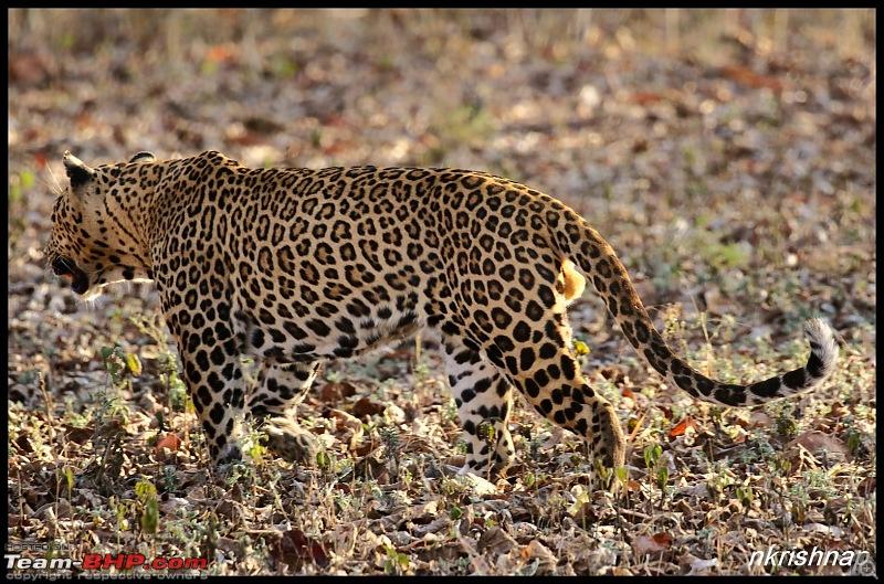 Jungle Retreat Wayanad and Nagarhole yet again!-img_6152.jpg