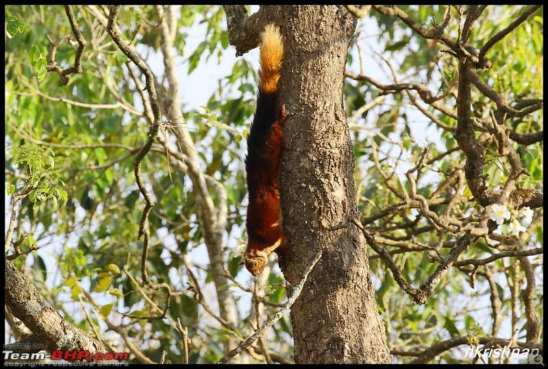 Jungle Retreat Wayanad and Nagarhole yet again!-img_6669.jpg