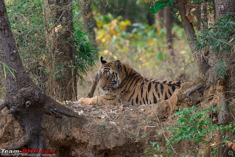 Tadoba Wilderness!-rajbehra-cub-bund.jpg