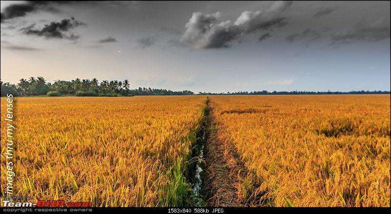 Breathe easy & slow down : That's how the Kerala backwaters affect you!-kuttanad-sojourns-261.jpg