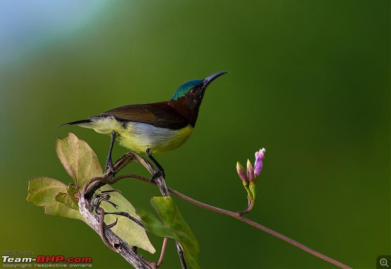 Photologue: Bird watching at Palakkad-_dsc1048edit.jpg