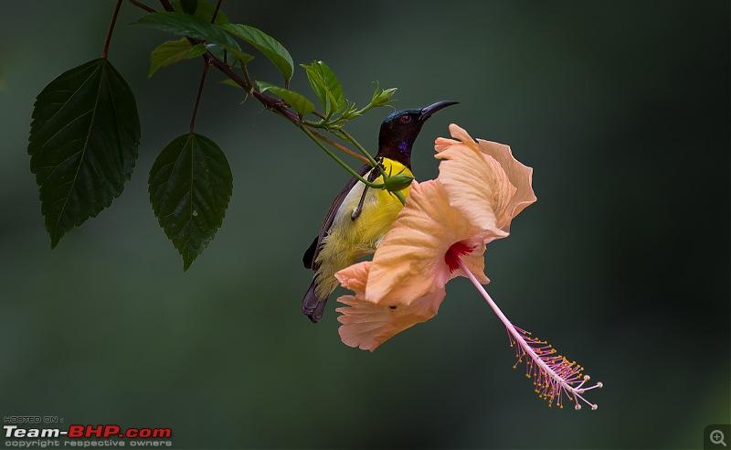 Photologue: Bird watching at Palakkad-_dsc82493.jpg