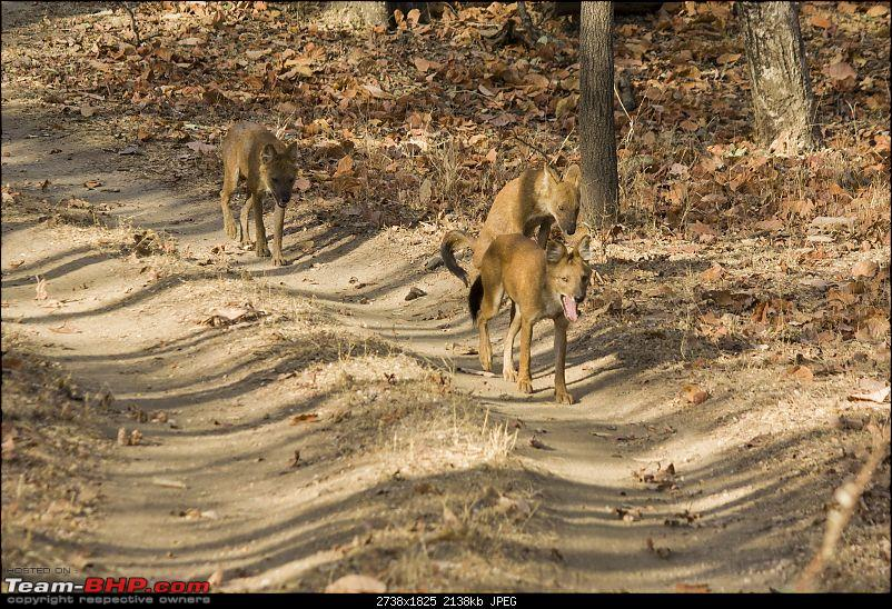 The Jungles of Pench-09.jpg