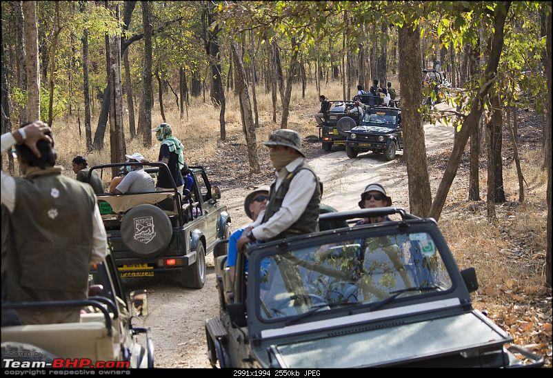 The Jungles of Pench-20.jpg