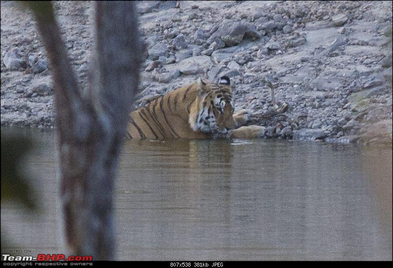 The Jungles of Pench-25.jpg