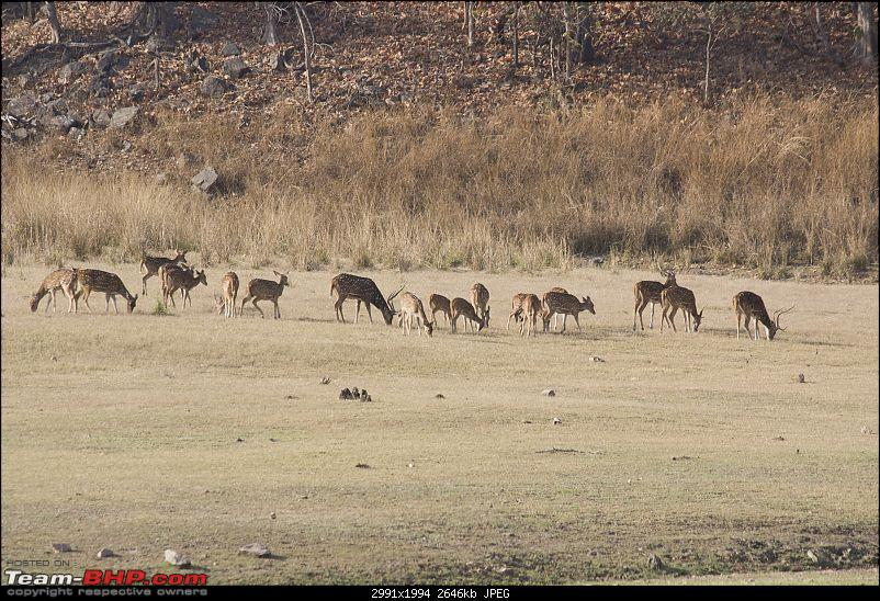 The Jungles of Pench-39.jpg