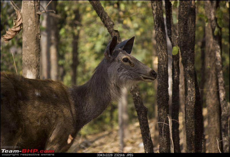 The Jungles of Pench-52.jpg