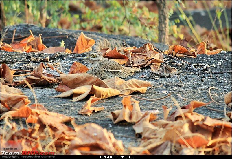 The Jungles of Pench-26.jpg