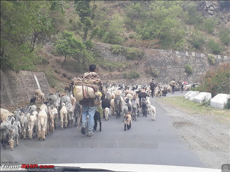 8597 Kms Drive - Exploring Himachal! Amritsar – Khajjiar – Dalhousie – Dharamshala – Manali - Chail-d829.jpg