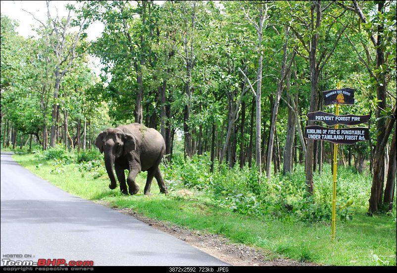 More Pics: Hyd-Bandipur-Madumalai-Nagarahole-left-turn.jpg