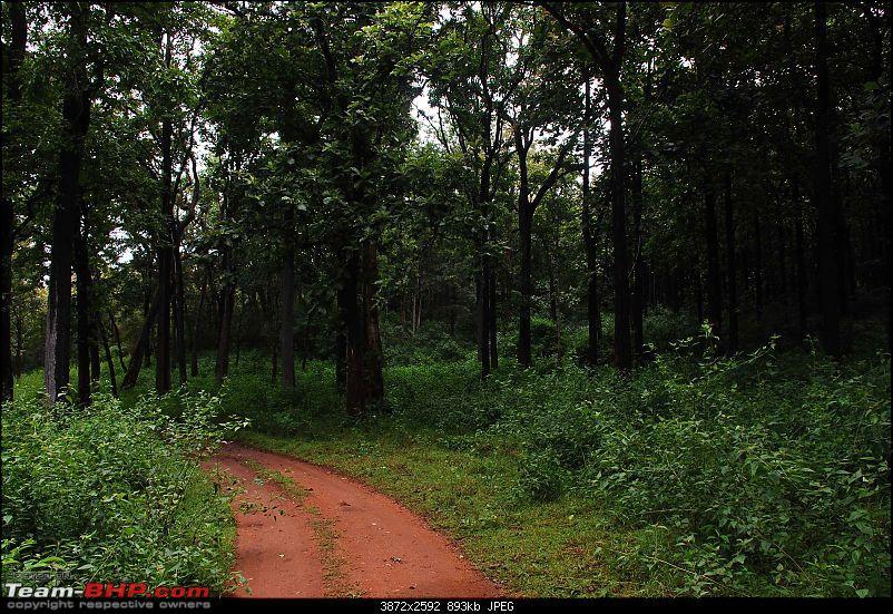 More Pics: Hyd-Bandipur-Madumalai-Nagarahole-drive-1.jpg