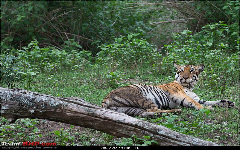 Tadoba Wilderness!-backwater-female4.jpg