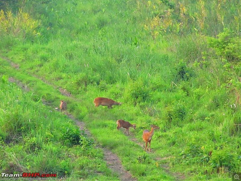 Call of the Wild: 1627 km drive to Jaldapara National Park, Buxa, Jayanti & Phuntsholing (Bhutan)-img_7766.jpg