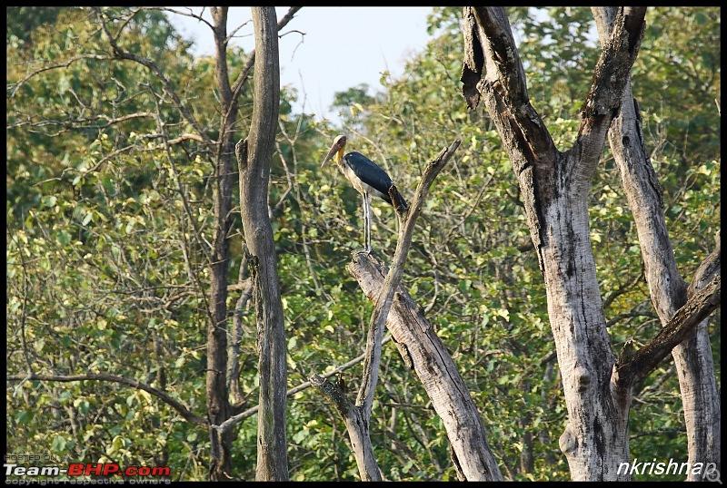 Jungle Retreat Wayanad and Nagarahole-img_7393.jpg