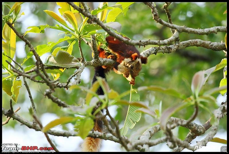 Jungle Retreat Wayanad and Nagarahole-img_7444.jpg