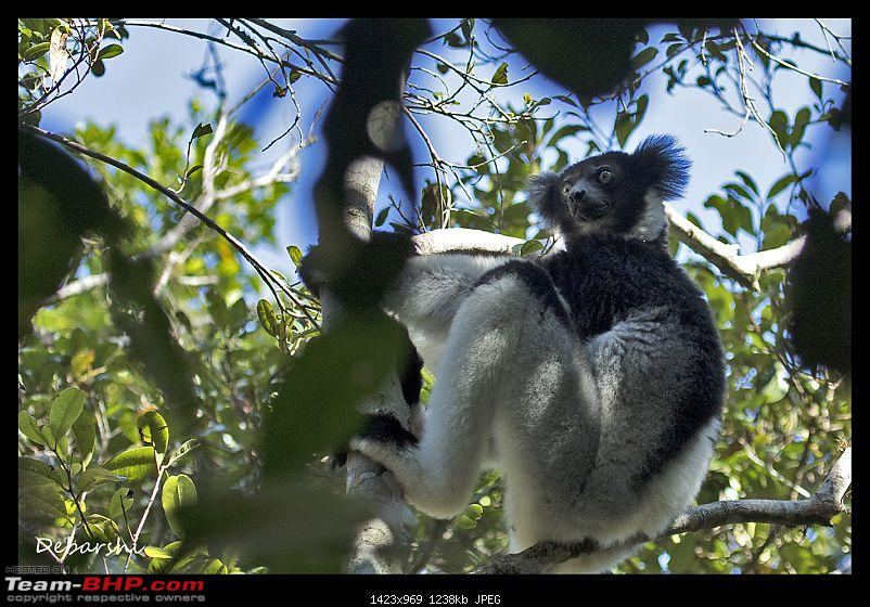Madagascar: A wilderness experience in the land of Lemurs & Tsingy-andasibe-indri.jpg