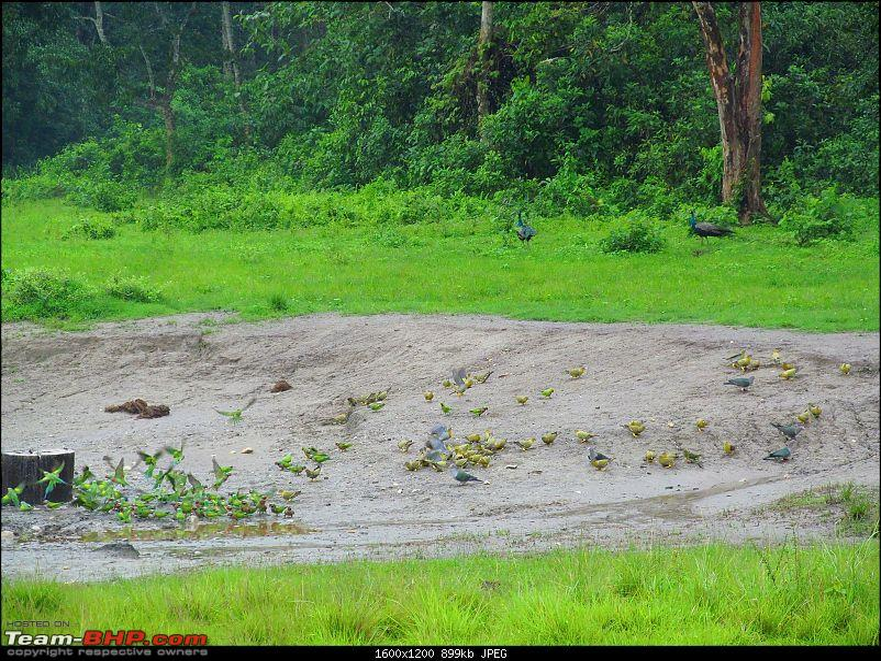Call of the Wild: 1627 km drive to Jaldapara National Park, Buxa, Jayanti & Phuntsholing (Bhutan)-img_7803.jpg
