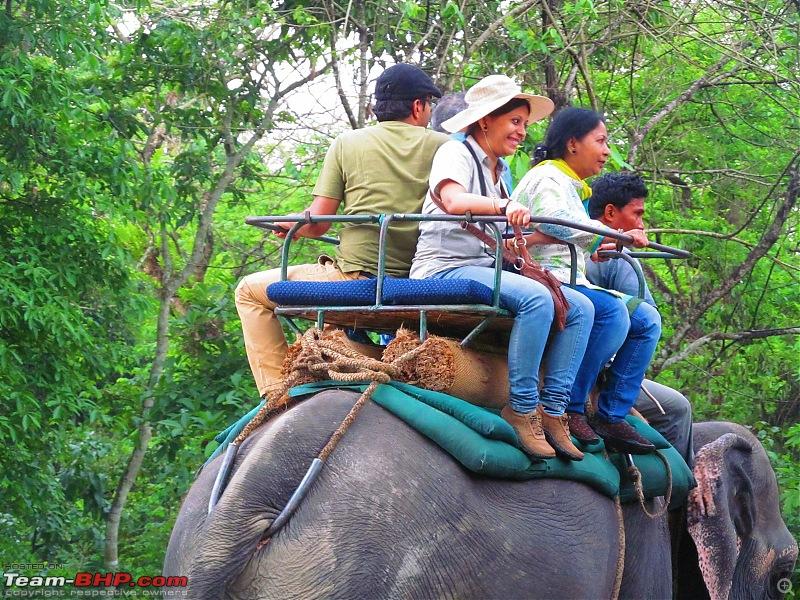 Call of the Wild: 1627 km drive to Jaldapara National Park, Buxa, Jayanti & Phuntsholing (Bhutan)-img_7850.jpg