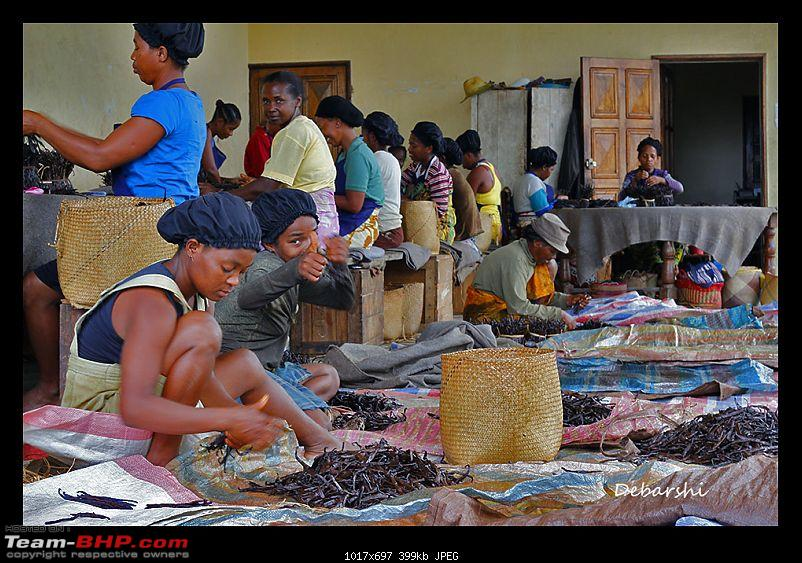 Madagascar: A wilderness experience in the land of Lemurs & Tsingy-maroantsetra-workers-processing-vanilla.jpg