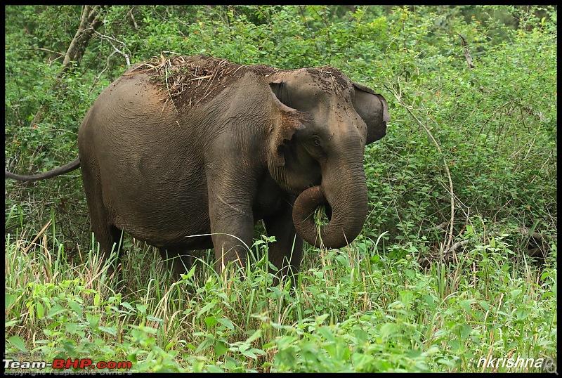 Kabini jungle lodges and resorts, Karapore-img_7898.jpg