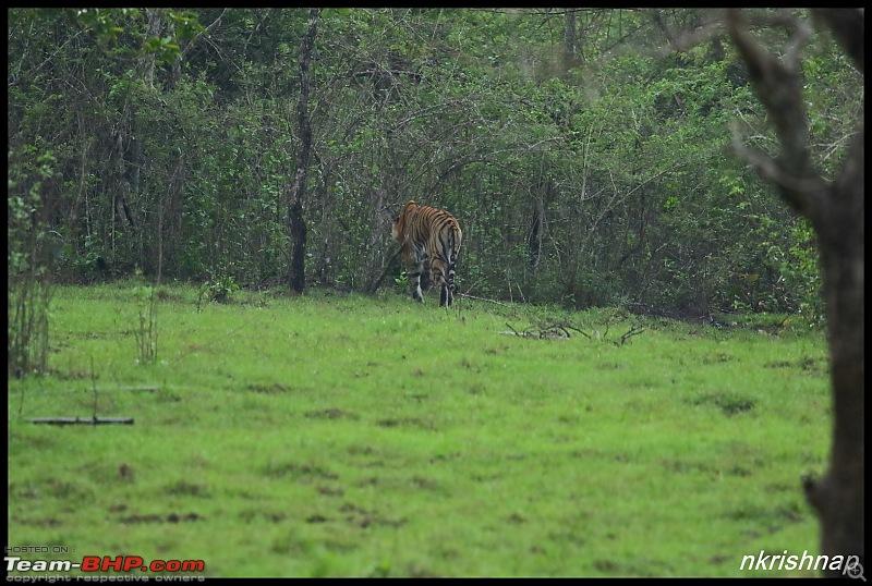 Kabini jungle lodges and resorts, Karapore-img_8452.jpg