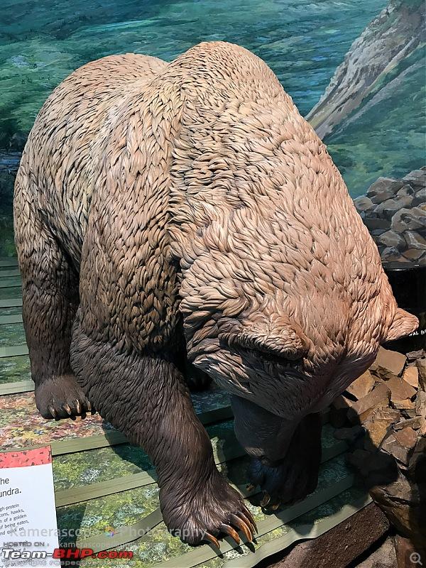 Alaska: Exploring the last frontier of North America-img_0953-212.jpg
