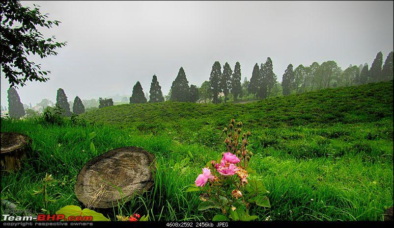Mystical Sikkim - Utopia here, now!-24.jpg