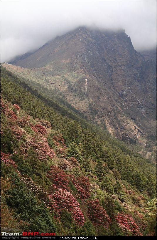 Trek to the Everest Base Camp-rhododendron-forest-nepal.jpg
