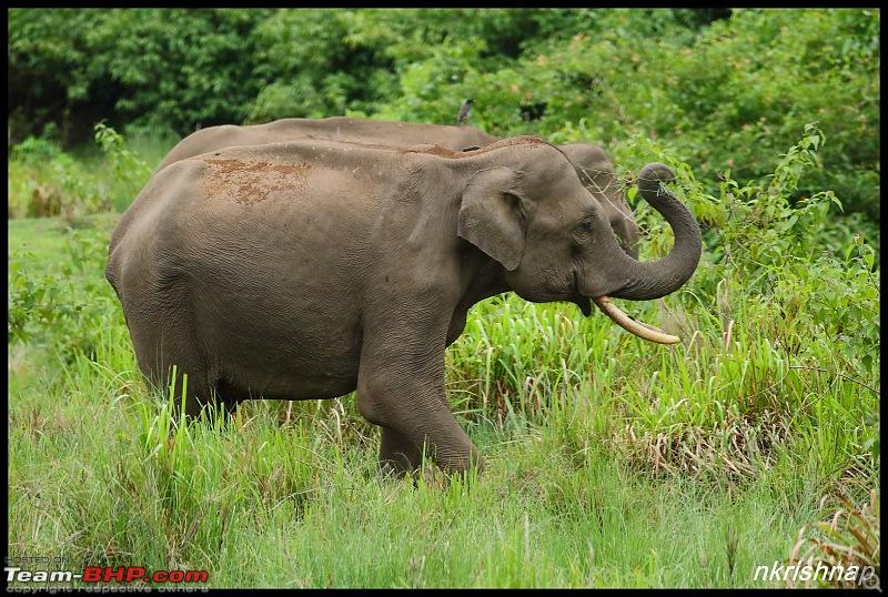 Jungle Retreat Wayanad and Nagarahole-img_9187.jpg