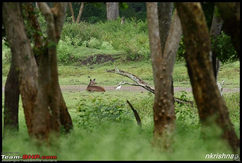 Wildlife at Nagarhole & Kabini-img_9755.jpg