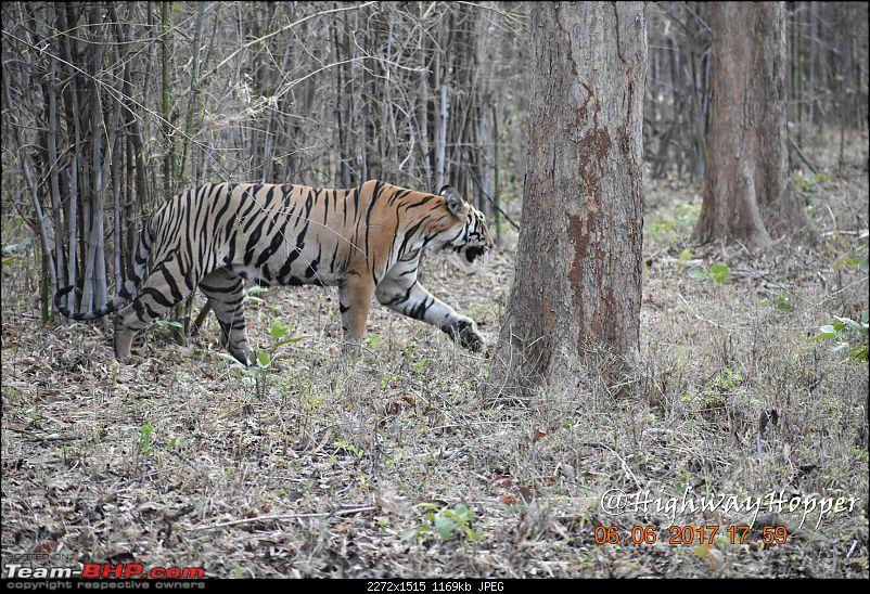 Blue Bolt: Hyderabad to Tadoba. Tigers spotted!-dsc_0913.jpg