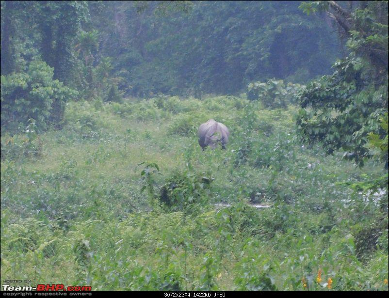 Tuskers of Chilapata : A thrilling drive to Northern Bengal & Bhutan-dscn0999rhino1.jpg