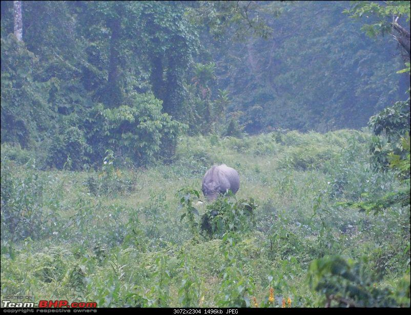 Tuskers of Chilapata : A thrilling drive to Northern Bengal & Bhutan-dscn0999rhino2.jpg