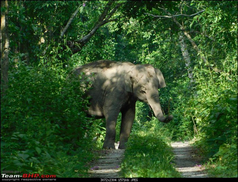 Tuskers of Chilapata : A thrilling drive to Northern Bengal & Bhutan-dscn1337elephant1.jpg