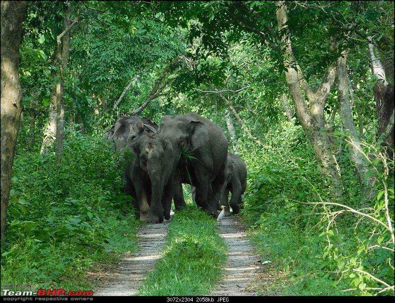 Tuskers of Chilapata : A thrilling drive to Northern Bengal & Bhutan-dscn1346elephants2.jpg