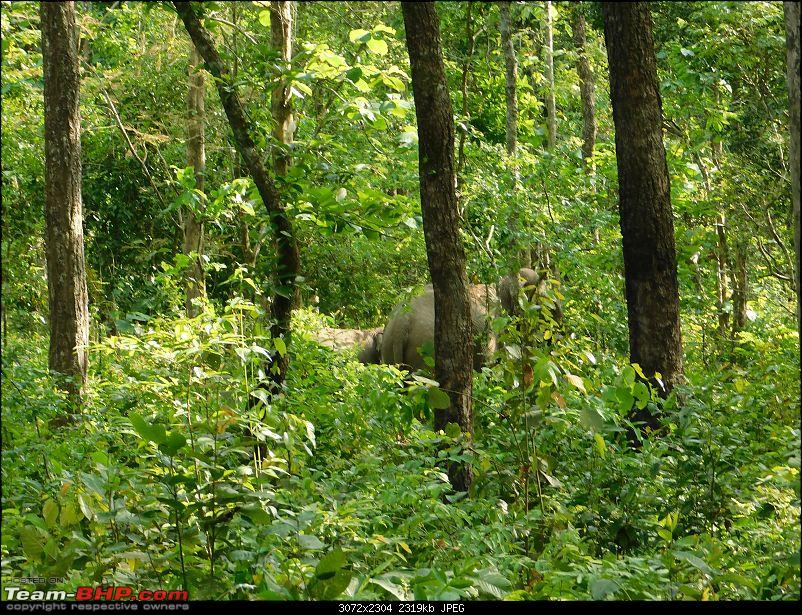 Tuskers of Chilapata : A thrilling drive to Northern Bengal & Bhutan-dscn1353elephants4.jpg