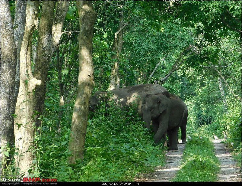 Tuskers of Chilapata : A thrilling drive to Northern Bengal & Bhutan-dscn1347allcrossed.jpg