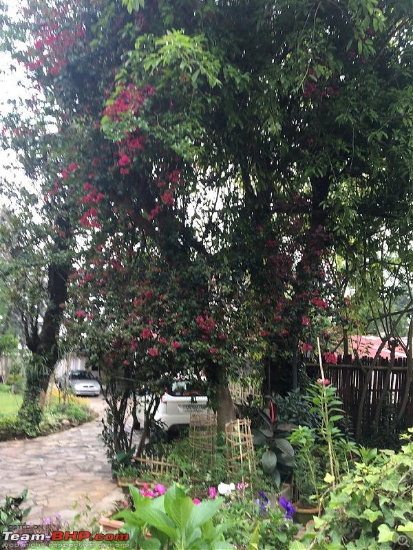 NorthEast Reloaded: Meghalaya -> Assam -> Arunachal-08img_0591.jpg