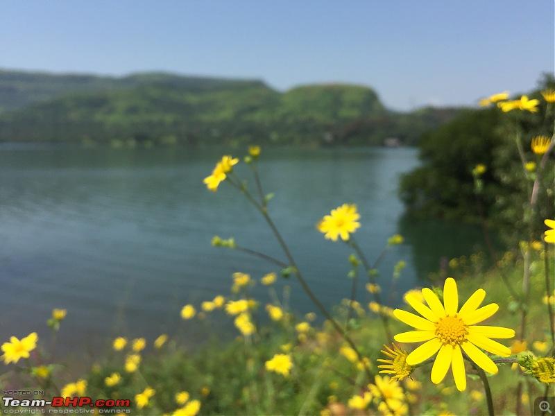 Rejuvenating getaway drive - Tamhini Ghat-others.jpg