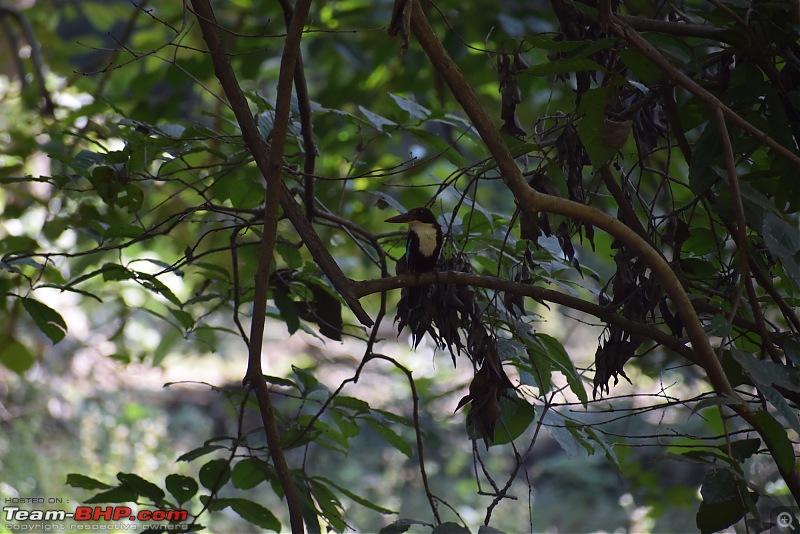 Mumbai to Tadoba: Solo trip in my Isuzu D-Max V-Cross-bird-2.jpg