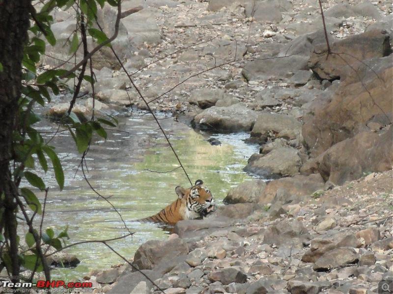 Ranthambore - Land of Forts, Hills & Tigers-dsc02863.jpg