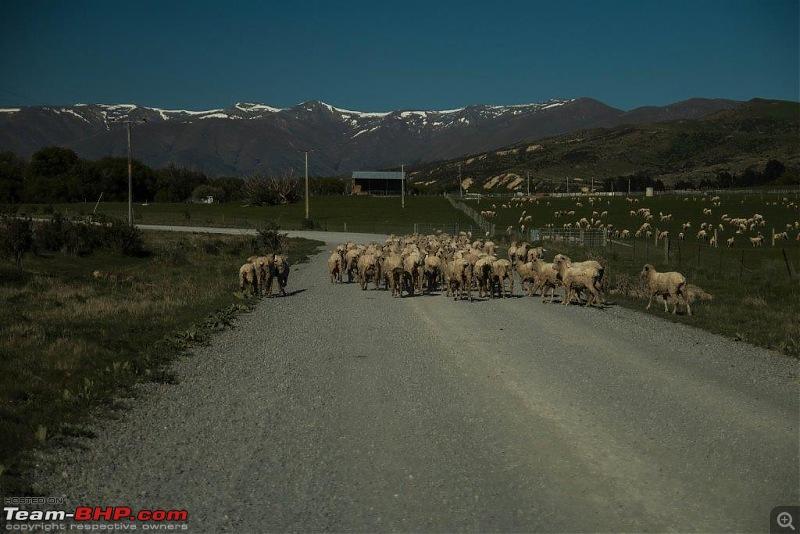 Bonhomie in New Zealand - 5000 kms in 15 days-img_2655.jpg