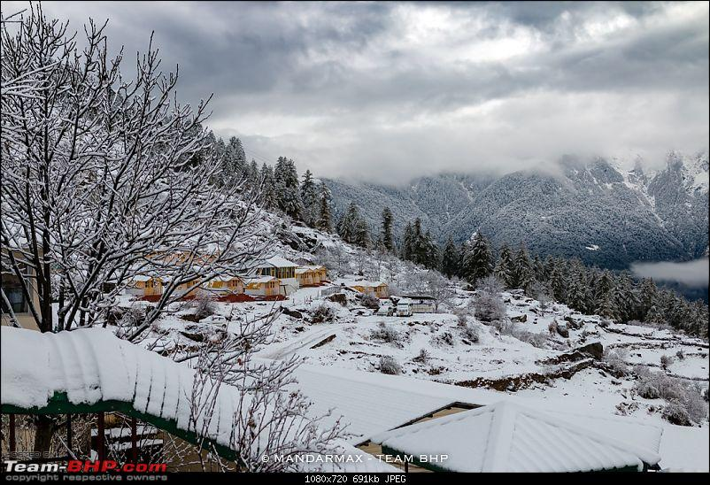Chhota Break - Auli & Jim Corbett in 4 days-2morningviewtreesnow.jpg