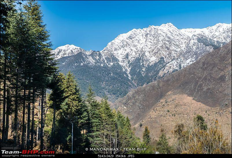 Chhota Break - Auli & Jim Corbett in 4 days-9mountainroadtreesbest.jpg