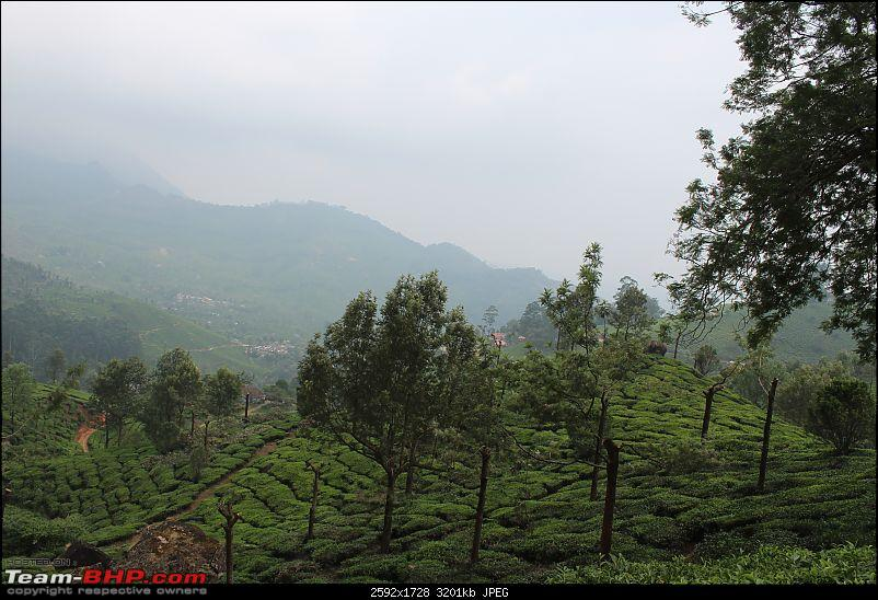 CT100B: 700 kms of Munnar, done right!-img_1367.jpg