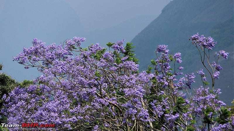Parambikulam through Valparai - Escape from madness-image00015a.jpg