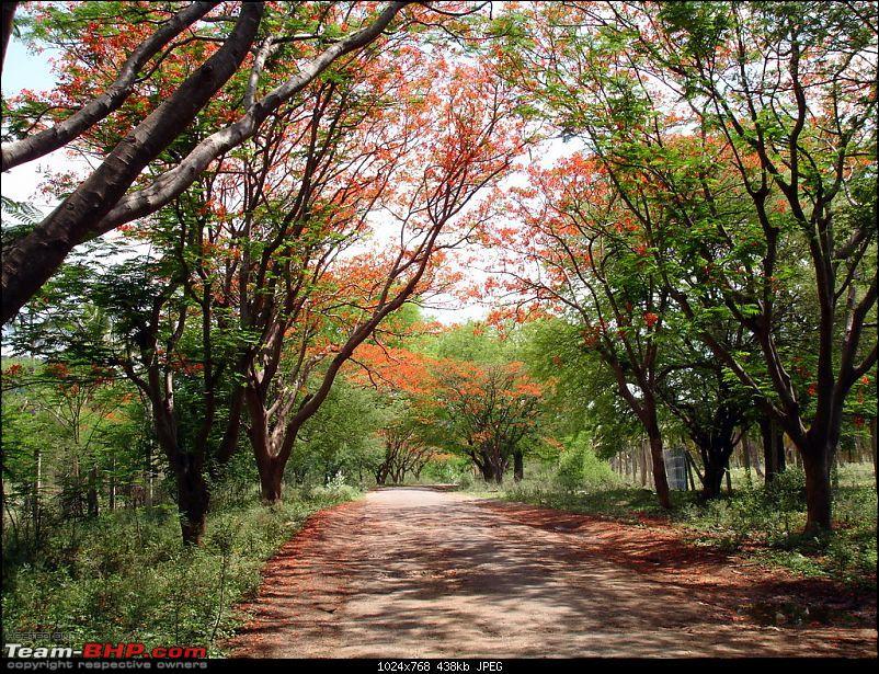 Day trip - Bangalore - Mekedatu - Bangalore-dsc00421.jpg