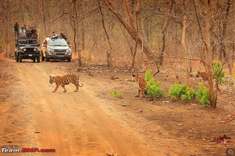 Isuzu MU-X goes to the Tipeshwar wildlife sanctuary-8bc6e6ded19642e9b2484d2377b4afd4.jpeg