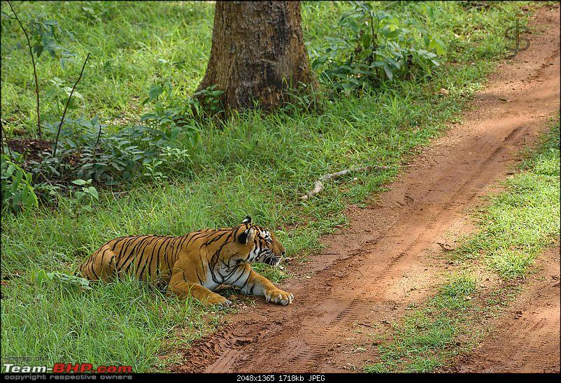 Kabini - The call of the wild-kbnmay18042.jpg